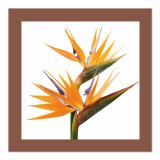 10 x  20 Servietten, 3-lagig 1/4-Falz 33 cm x 33 cm chocolate Oiseau de Paradis