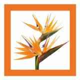 10 x  20 Servietten, 3-lagig 1/4-Falz 33 cm x 33 cm orange Oiseau de Paradis